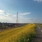 江戸川サイクリングロード